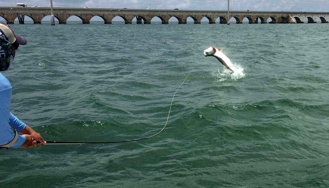 islamorada-fishing-guide-capt-steve-client-tarpon-jump